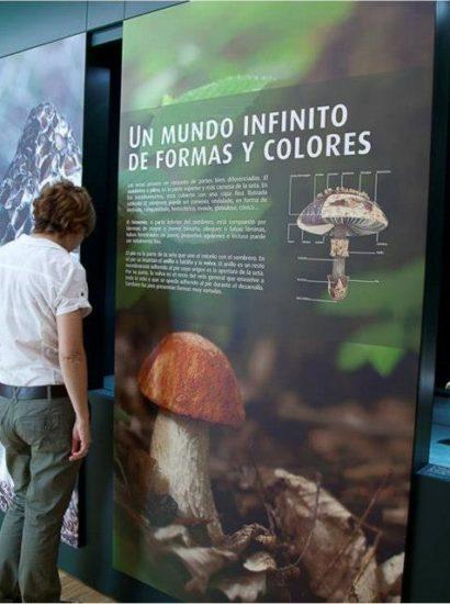 centro micologico caniles2 410x550 - Centro de Interpretación Micológico - Geoparque de Granada